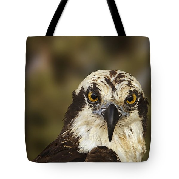 Osprey  Tote Bag by Brian Cross