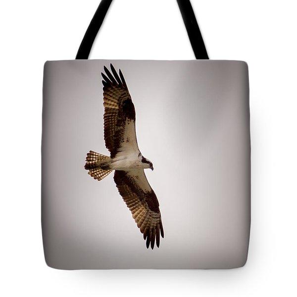 Osprey Tote Bag by Ernie Echols