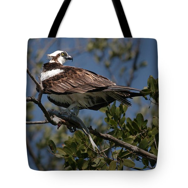 Osprey Of The Everglades Tote Bag