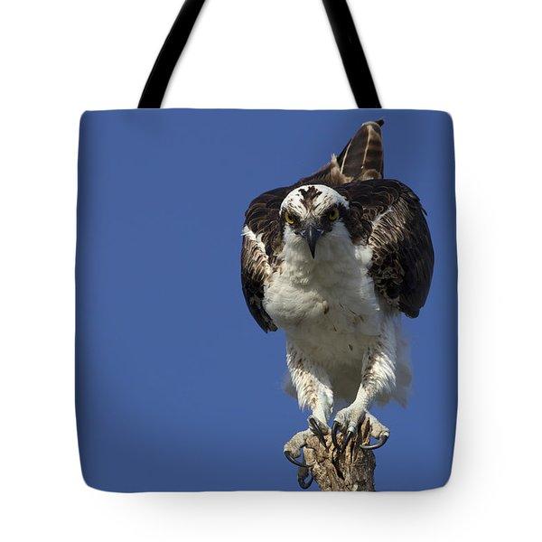 Osprey Photo Tote Bag