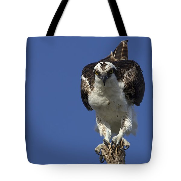 Osprey Photo Tote Bag