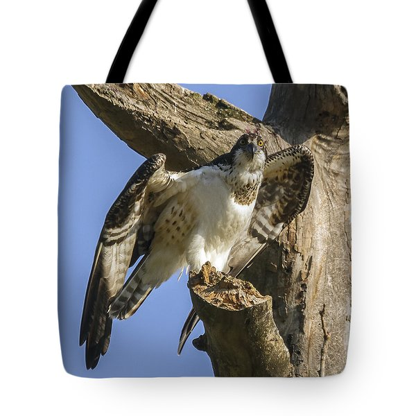 Tote Bag featuring the photograph Osprey Pose by David Lester