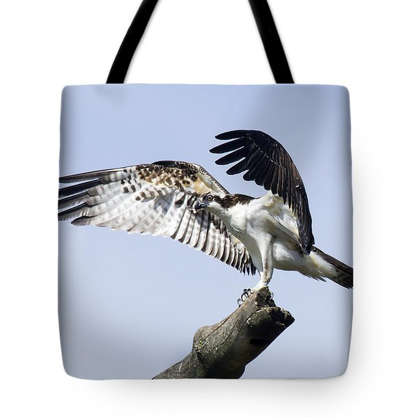 Tote Bag featuring the photograph Osprey Pride 2 by David Lester