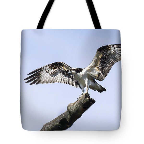 Tote Bag featuring the photograph Osprey Pride  by David Lester