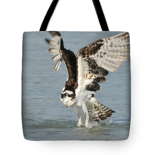 Osprey Taking Off Tote Bag by Bradford Martin