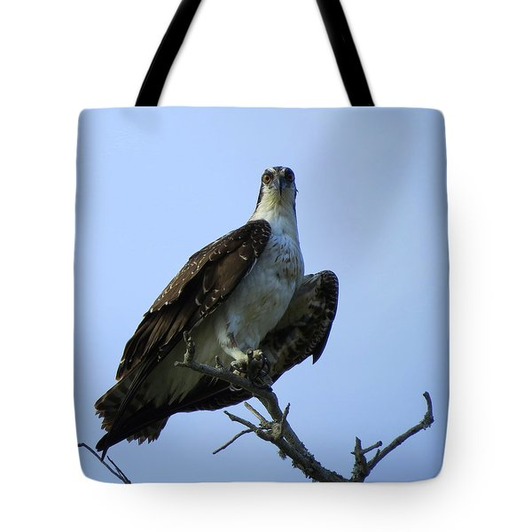 Tote Bag featuring the photograph Osprey View by Phyllis Beiser