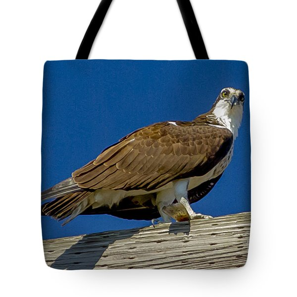 Osprey With Fish In Talons Tote Bag by Dale Powell