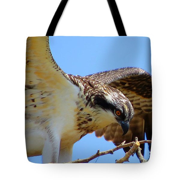 Tote Bag featuring the photograph Osprey Youth by Dianne Cowen