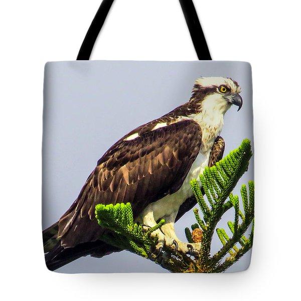 Osprey Tote Bag by Zina Stromberg