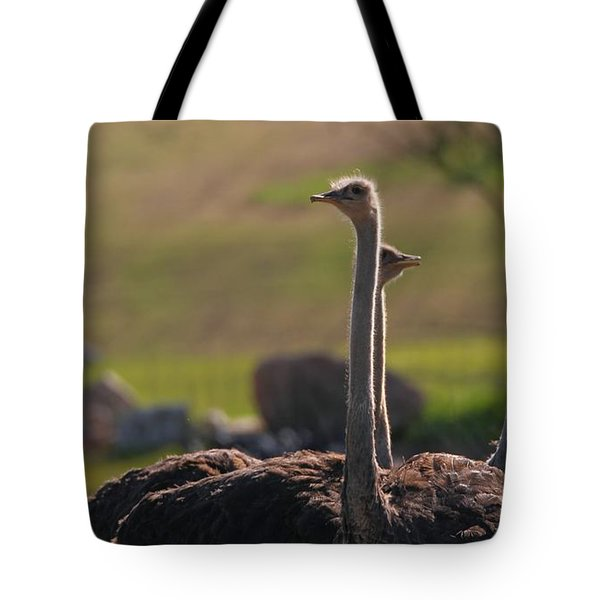 Ostriches Tote Bag by Dan Sproul
