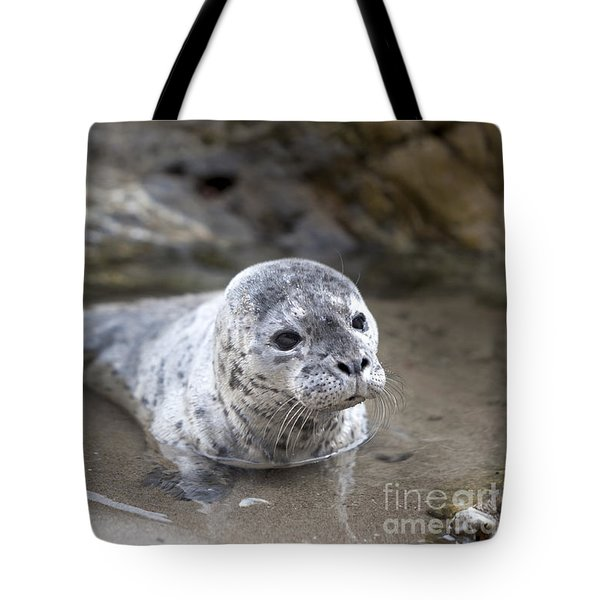 Out For A Swim Tote Bag by David Millenheft