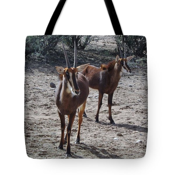 Out Of Africa B Tote Bag
