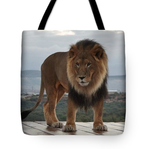 Out Of Africa Lion 3 Tote Bag