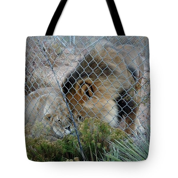 Out Of Africa Lions 4 Tote Bag