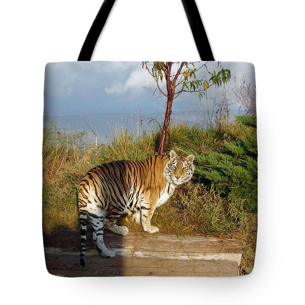 Out Of Africa  Tiger 1 Tote Bag