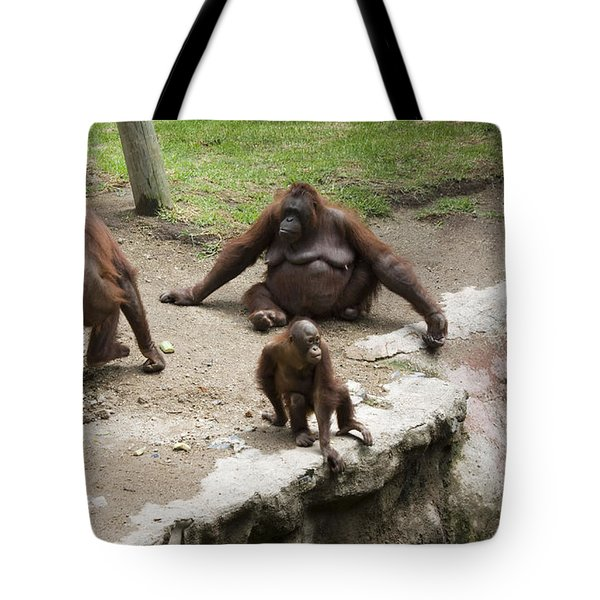 Out Of Reach Tote Bag by Lynn Palmer