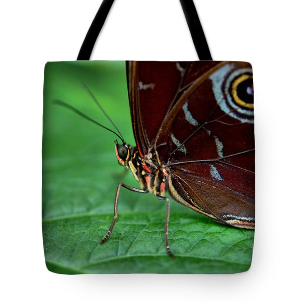 Owl Butterfly Tote Bag