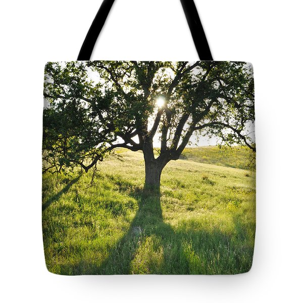 Tote Bag featuring the photograph Pacific Coast Oak Malibu Creek by Kyle Hanson
