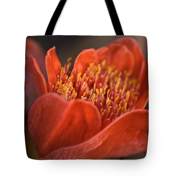 Paintbrush Lily Tote Bag by Joy Watson
