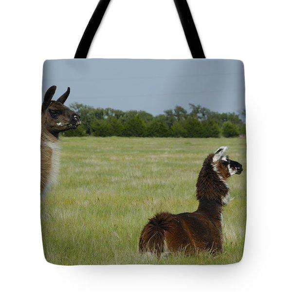 Pair Of Alpacas Tote Bag by Charles Beeler