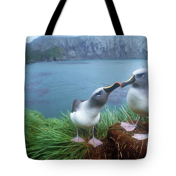 Pair Of Grey-headed Albatross Tote Bag