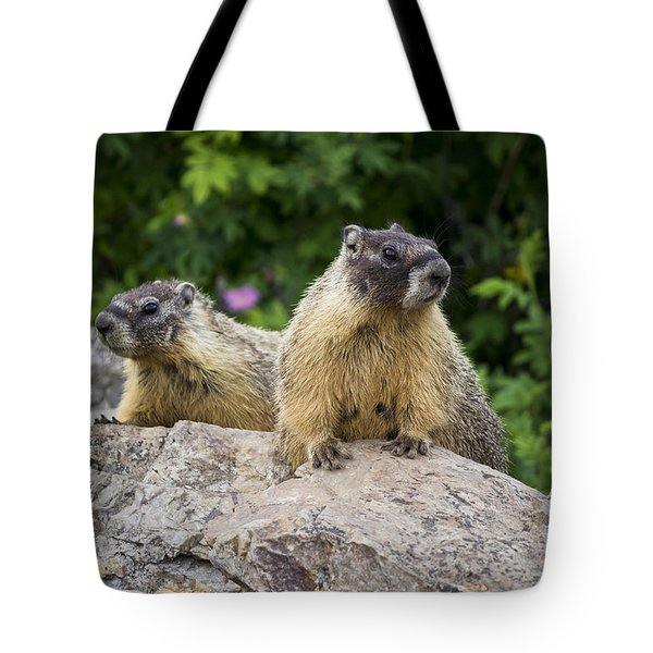 Pair Of Marmots Tote Bag by Maria Janicki