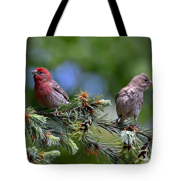 Pair Of Purple Finches Tote Bag