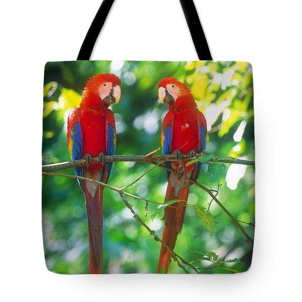 Pair Of Scarlet Macaws Tote Bag
