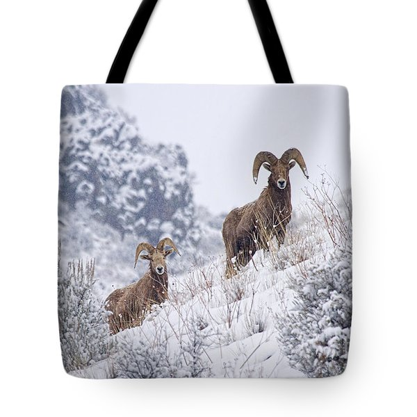 Pair Of Winter Rams Tote Bag by Mike  Dawson