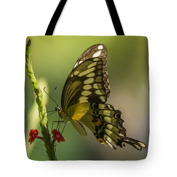 Tote Bag featuring the photograph Palamedes Swallowtail by Jane Luxton