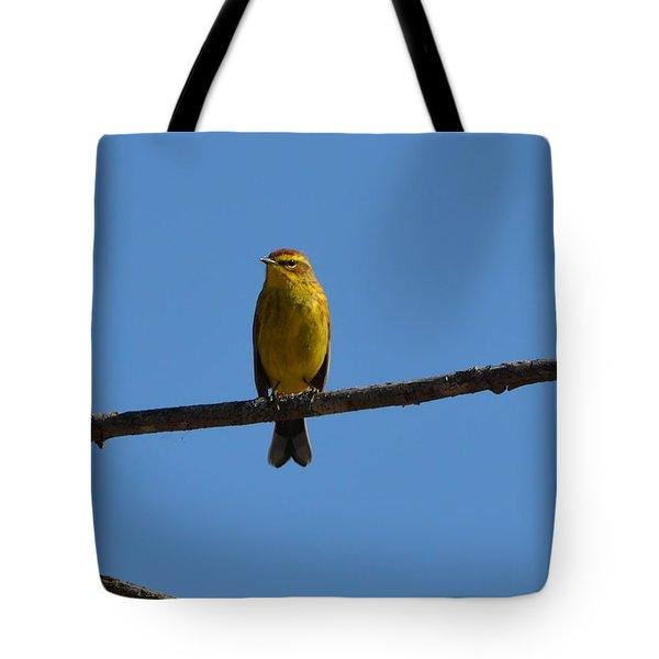 Palm Warbler Tote Bag by James Petersen