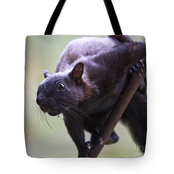 Panamanian Tree Squirrel Tote Bag by Heiko Koehrer-Wagner