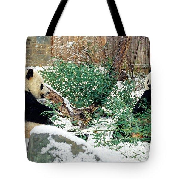 Panda Bears In Snow Tote Bag