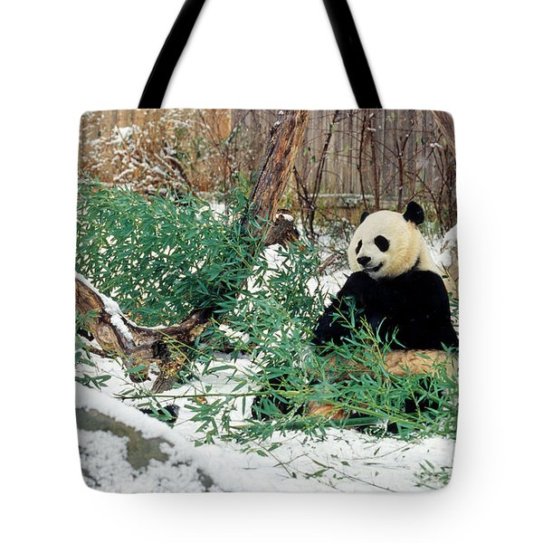 Panda Bears In Snow Tote Bag by Chris Scroggins