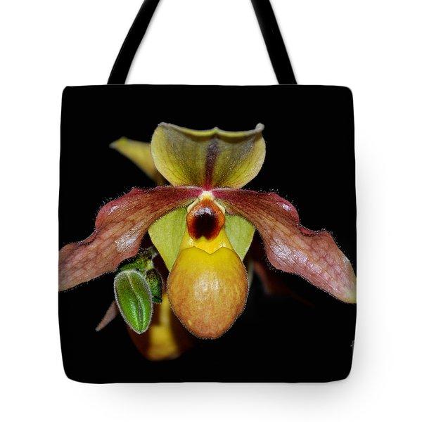 Paphiopedilum 'summer Ice' Orchid Tote Bag
