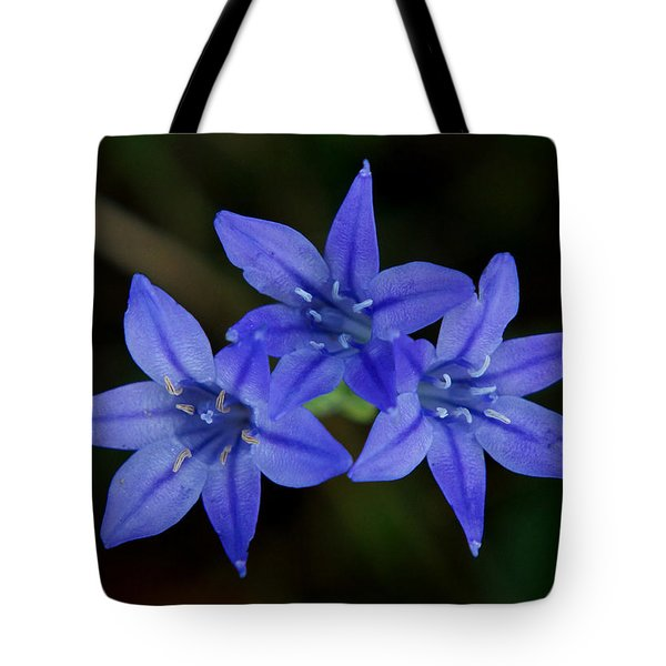 Paradise Lost Tote Bag by Kim Pate