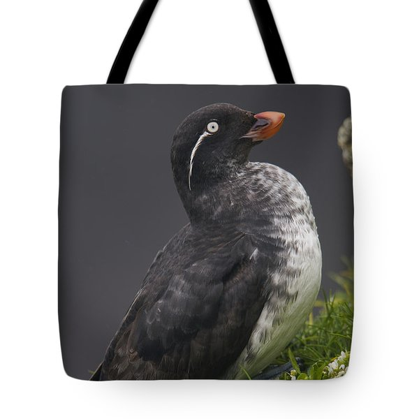 Parakeet Auklet Sitting In Green Tote Bag by Milo Burcham