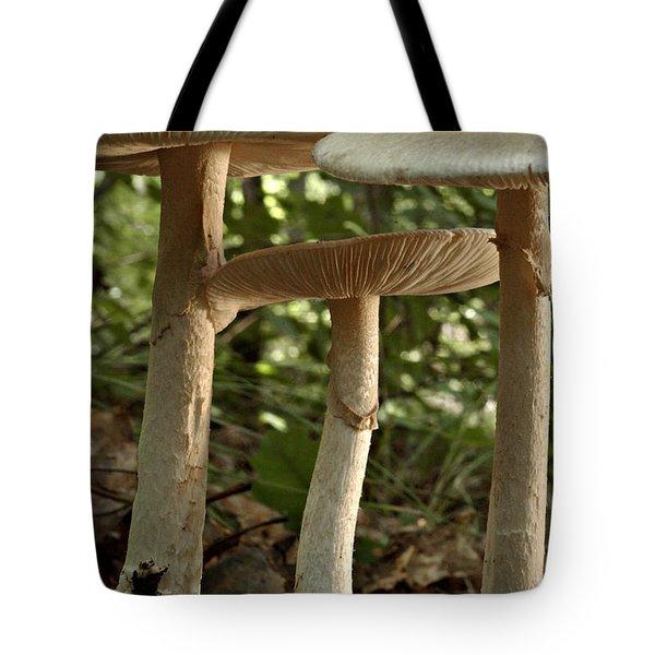 Parasol Mushrooms Macrolepiota Sp Tote Bag by Susan Leavines