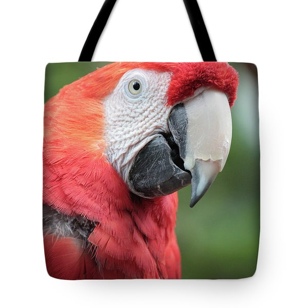 Parrot Profile Tote Bag by Carol Groenen