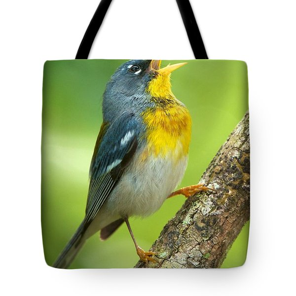 Parula Song Tote Bag