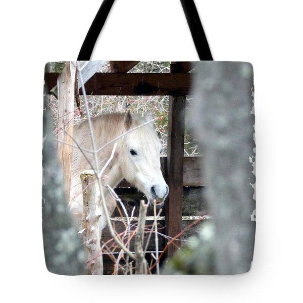 Paso Fino Stallion Close-up Tote Bag