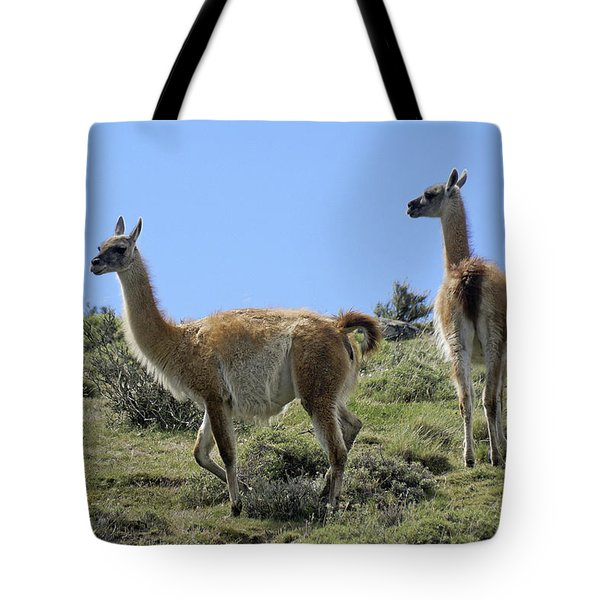Patagonian Guanacos Tote Bag by Michele Burgess