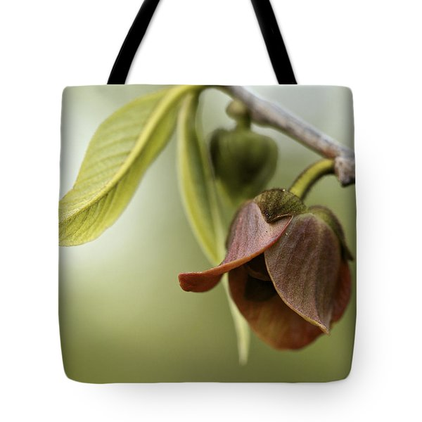 Pawpaw - Spring Delight Tote Bag
