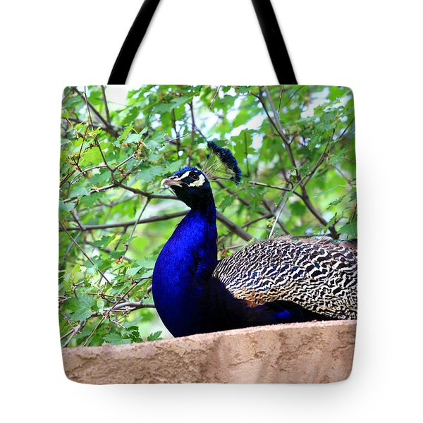 Peacock Tote Bag by Chris Thomas