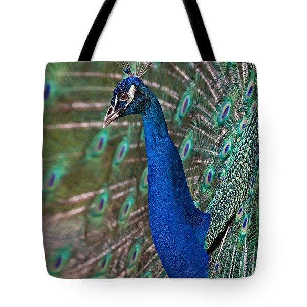 Peacock Display Tote Bag by Susan Candelario