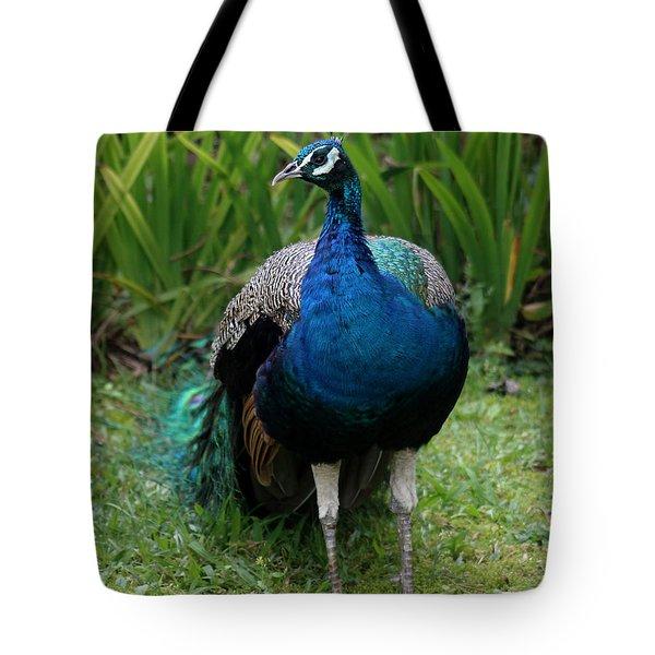 Peacock Tote Bag by Pamela Walton