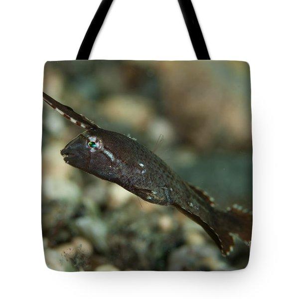 Peacock Razorfish, Gorontalo, Indonesia Tote Bag by Steve Jones