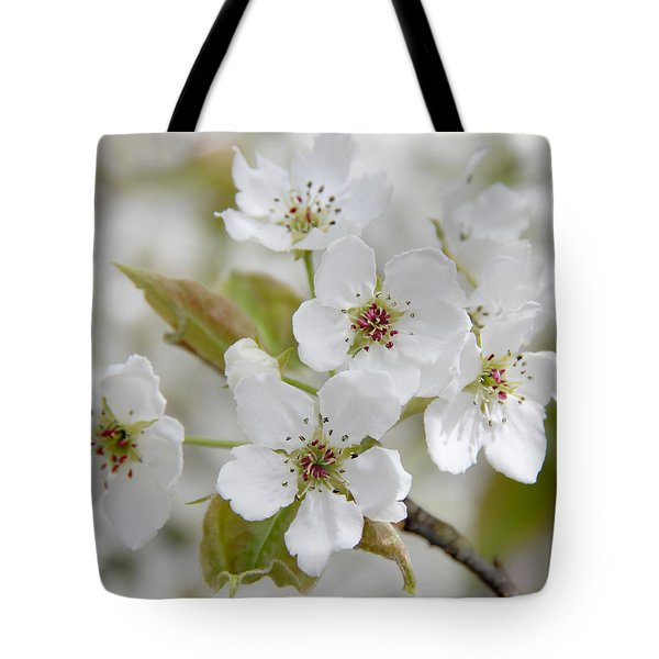 Pear Tree White Flower Blossoms Tote Bag by Jennie Marie Schell