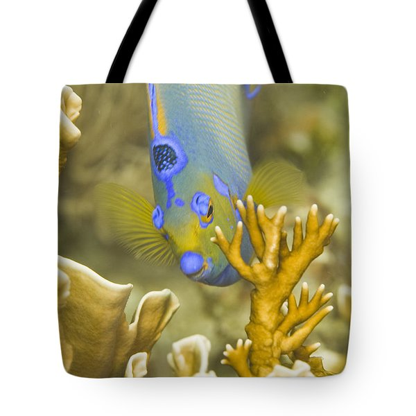 Tote Bag featuring the photograph Peek-a-boo by Paula Porterfield-Izzo