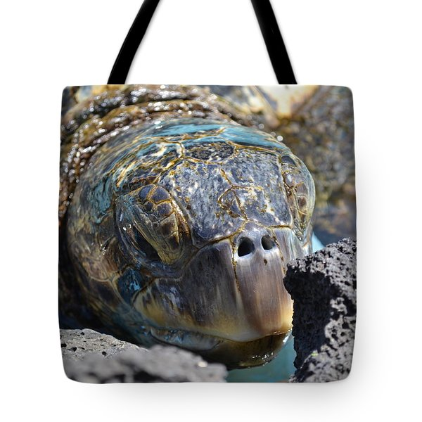 Peek-a-boo Turtle Tote Bag by Amanda Eberly-Kudamik